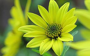 花卉, 花, 宏, 美丽的花, 美丽的花朵, 植物群