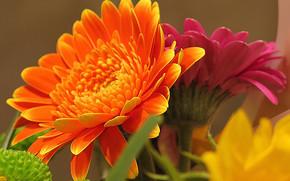 Blumen, Blume, Macro, schöne Blume, schöne Blumen, flora