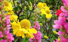 Flori, floare, Macro, floare frumoasa, flori frumoase, floră