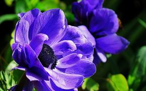 フラワーズ, 花, マクロ, 美しい花, 美しい花, フローラ