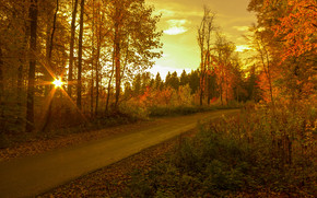 sunset, autumn, road, trees, landscape