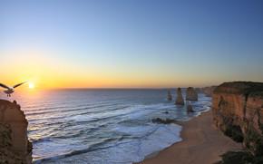zachód słońca, morze, Rocks, Brzeg, mewa, krajobraz