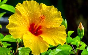 槿, 花, 植物群