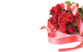 rosa, Roses, fiore, Fiori, rosso, COMPOSIZIONE, sfondo bianco, per le congratulazioni