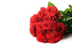 rosa, Roses, fiore, Fiori, rosso, COMPOSIZIONE, bouquet, sfondo bianco, per le congratulazioni