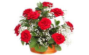 rose, Roses, fleur, Fleurs, rouge, COMPOSITION, bouquet, fond blanc, pour les félicitations
