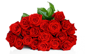 rose, Roses, flower, Flowers, red, COMPOSITION, bouquet, white background