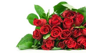 роза, розы, цветок, цветы, красные, композиция, букет, белый фон