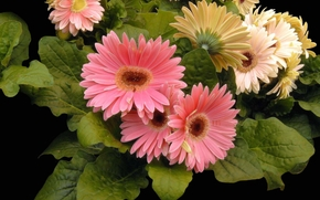 Primavera, Fiori, flora