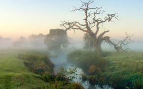 DAWN, river, trees, fog, landscape