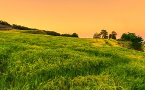 日落, 场, 景观