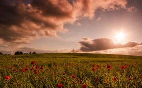 закат, поле, цветы, пейзаж
