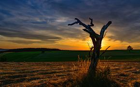 日落, 场, 树, 景观