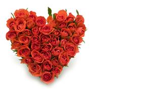 праздник, день Святого Валентина, сердце, розы, цветы