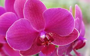 orquídea, flor, flora