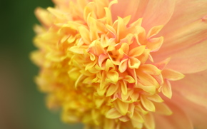 fiore, Fiori, flora, Macro, piante