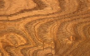 TEXTURE, テクスチャー, ツリー, 背景, デザインの背景, 木材組織