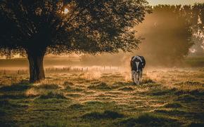 牛, COW, 自然, 偶蹄類