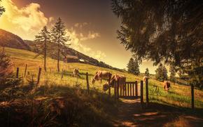 牛, COW, 雄牛, 自然, 偶蹄類, 牧草