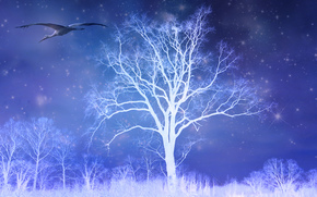 night, shine, trees, stork