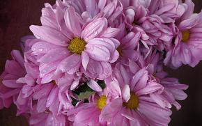 Flowers, drops, flora