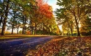 automne, route, arbres, paysage