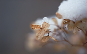 leaves, withered, snow, winter, Macro