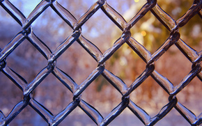 net, fence, SPRING, glaciation, Macro, ice