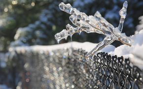 BRANCH, glaciation, Macro, ice, SPRING, net, fence