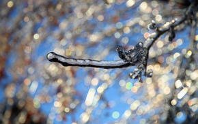 BRANCH, glaciation, Macro, ice, SPRING, bokeh
