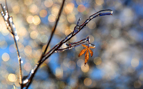 branch, sheet, ice, SPRING, bokeh