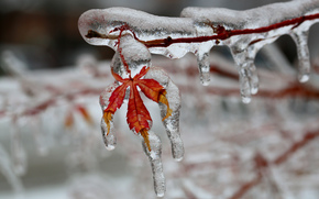 branch, sheet, glaciation, Icicles, ice