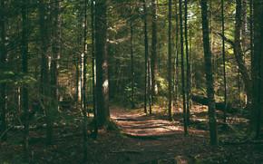las, drzew, charakter
