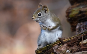 écureuil, animal, snag