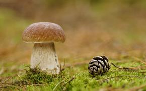 mushroom, white, Macro