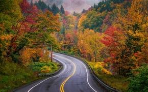 秋, 道路, 木, 風景