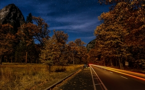 notte, stradale, foresta, alberi, autunno, paesaggio