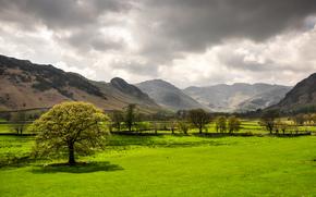 поле, горы, деревья, пейзаж