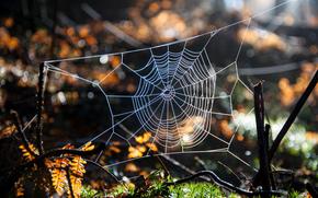 moss, web, Macro