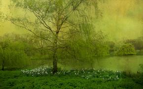 lac, clairière, arbres