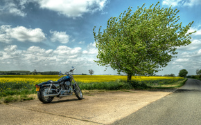 field, road, tree, motorcycle, landscape