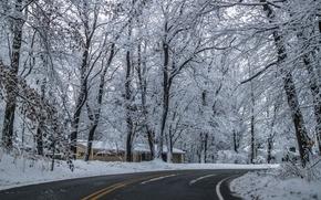 inverno, stradale, domestico, alberi, paesaggio