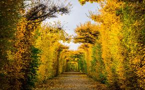 jesień, park, drzew, krajobraz
