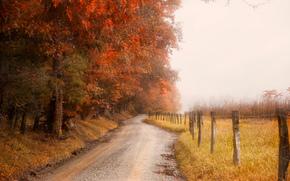 autunno, stradale, foresta, campo, alberi, paesaggio