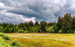 フィールド, 木, 風景