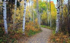 autunno, stradale, foresta, alberi, paesaggio