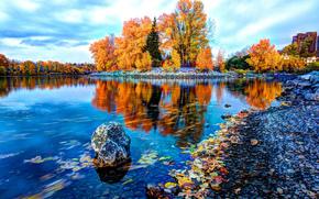 otoño, río, árboles, paisaje, Calgary