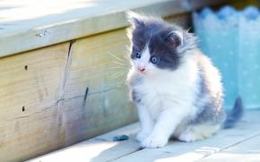 kitten, baby, view