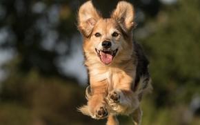 cane, saltare, gioia, stato d'animo