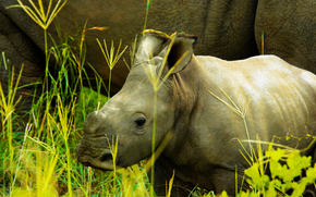 アフリカ, アフリカの動物, サイ, サイ, フォトsketchings博物学, 母と子